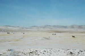 La steppe russe avec ses chevaux