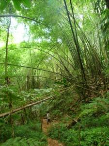 Forêt de bambous