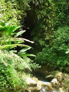Entrée de la grotte camouflée dans la végétation