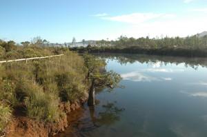 Végétation des abords de la rivière