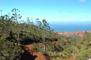 Végétation caractéristique des lieux avec les mines en contrebas.