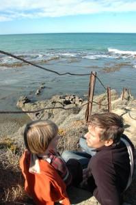 Observation des phoques à Oamaru (bushey beach)