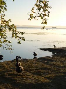 lac de Rotorua