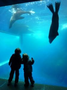 Vue imprenable sur les phoques