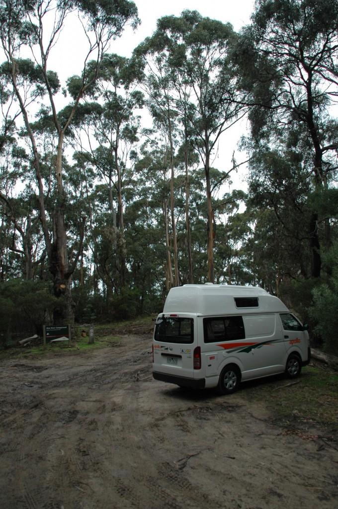 Forêt d'eucalyptus propice aux koalas