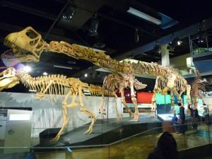Impressionnants squelettes de dinosaures
