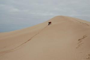 Escalade sur les dunes