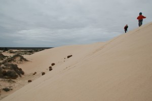 Promenade sur les crètes dunaires
