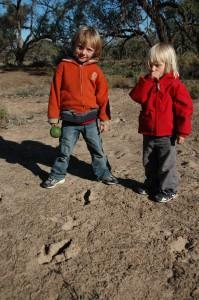 Suite des empreintes d'émeus dans la boue séchée...