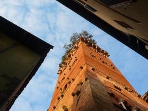 tour féodal de Lucca