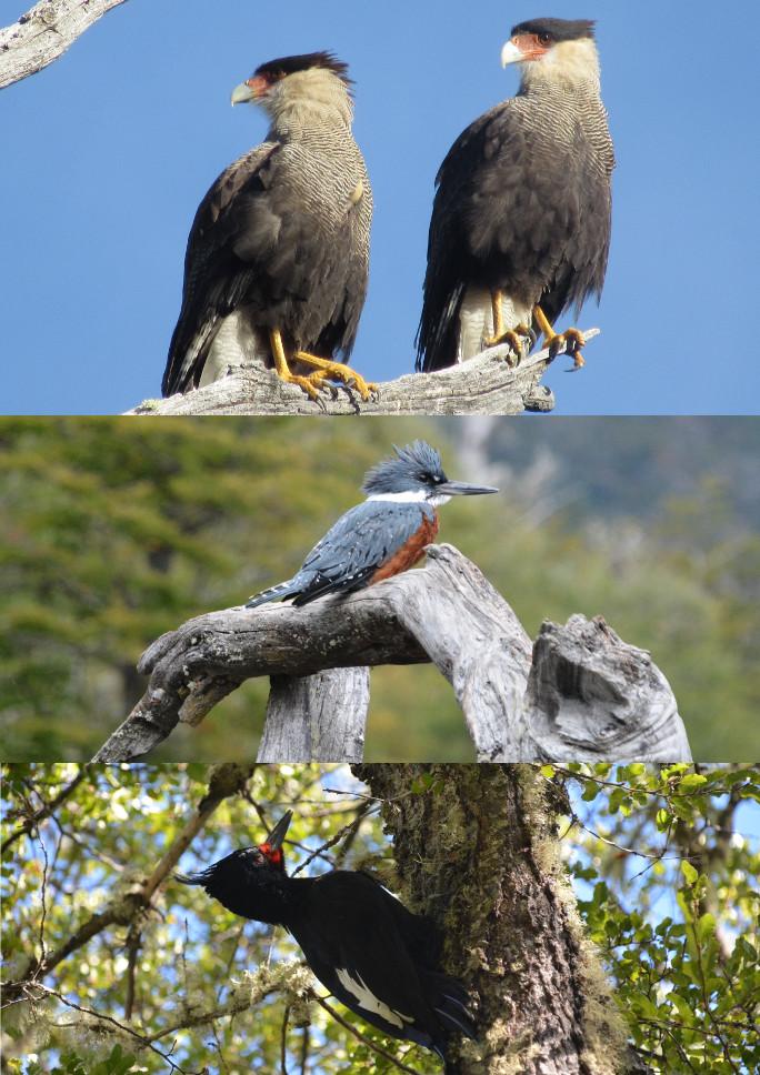 LG oiseaux