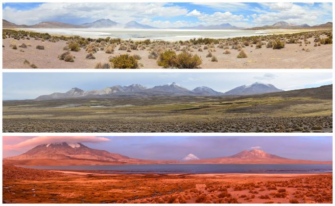05_Route des volcans-salar Surire_07