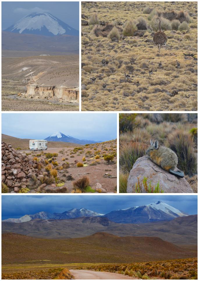 05_Route des volcans-salar Surire_09